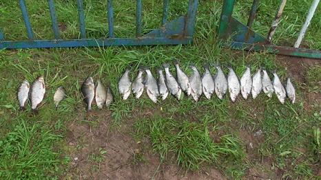 Штраф, исправительные работы или арест: три браконьера повторно попались за улов  рыбы на Витебщине, фото-2