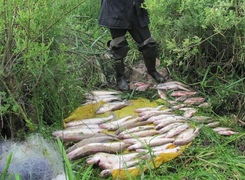 правил ведения рыболовного хозяйства и рыболовства россии